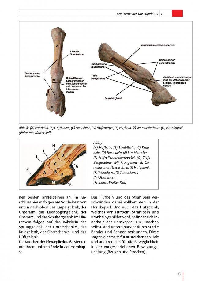 Beste Röhrbein Pferd Anatomie Bilder - Anatomie Von Menschlichen ...