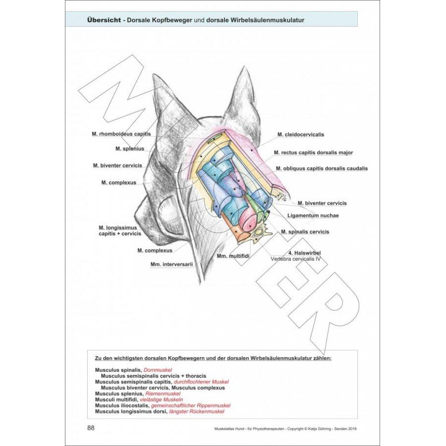 Lern- und Arbeitsbuch für Studium und Praxis für Tierphysio- und ...