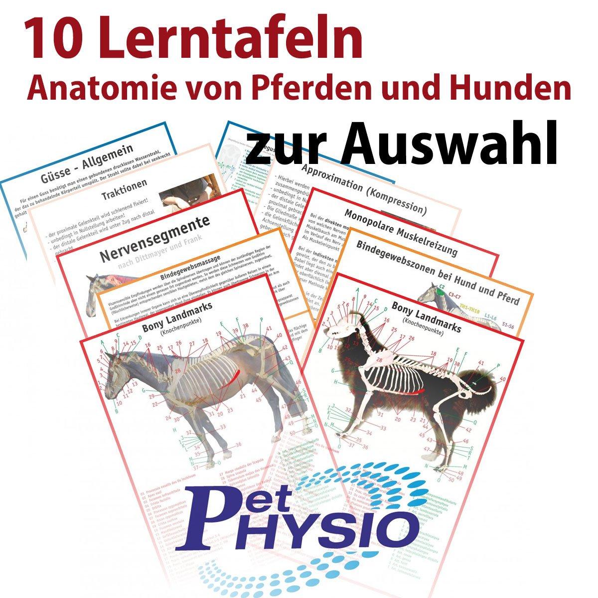Übersichtskartenset ANATOMIE von Pferden und Hunden - 10 Stück im Set